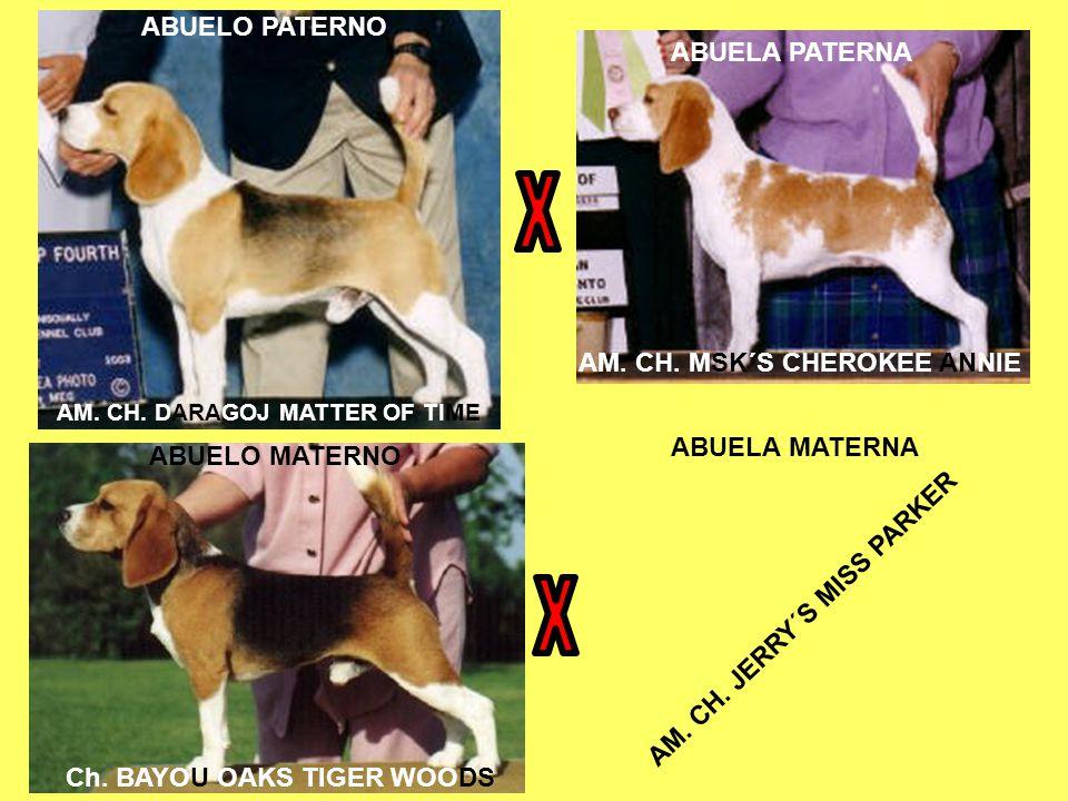 X X ABUELO PATERNO ABUELA PATERNA AM. CH. MSK´S CHEROKEE ANNIE