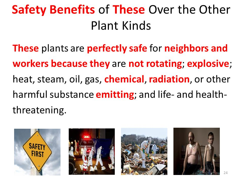 Safety Benefits of These Over the Other Plant Kinds