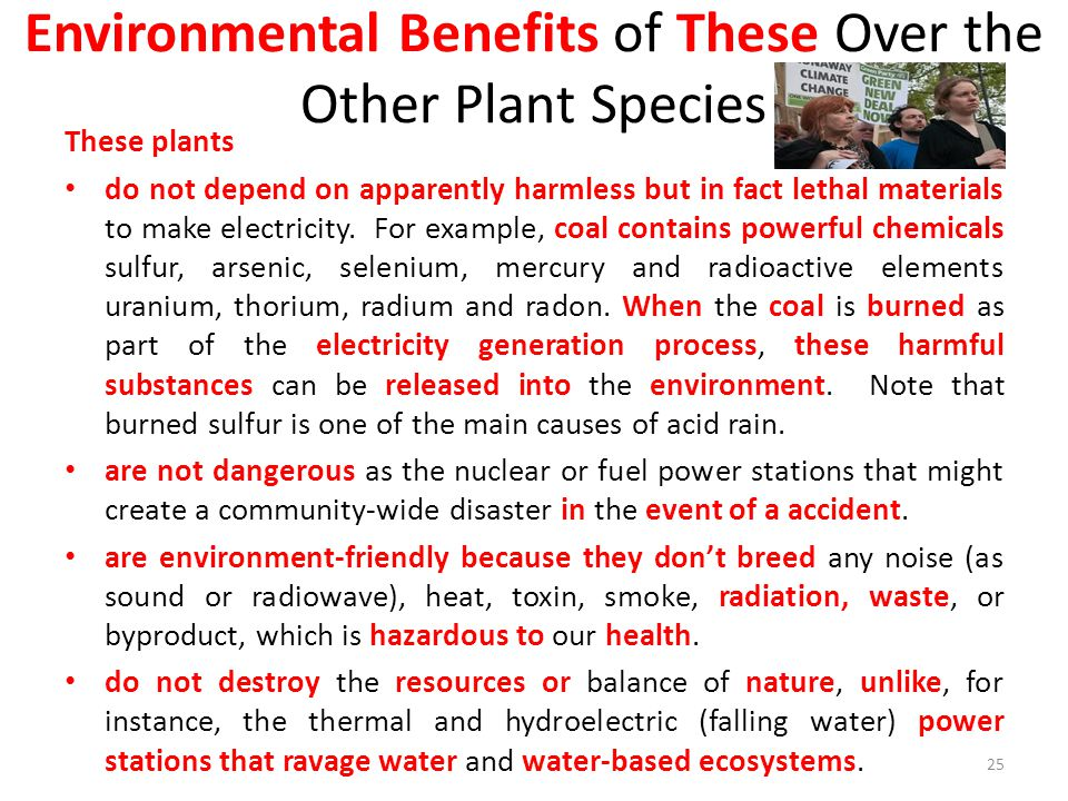 Environmental Benefits of These Over the Other Plant Species