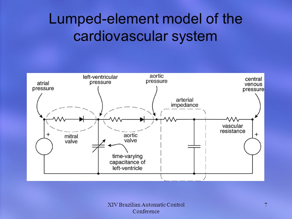 Lumped-element model of the cardiovascular system