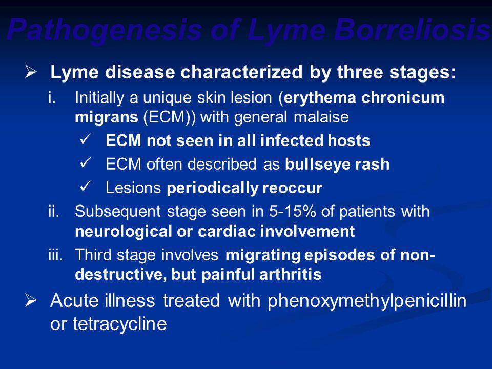 Pathogenesis of Lyme Borreliosis