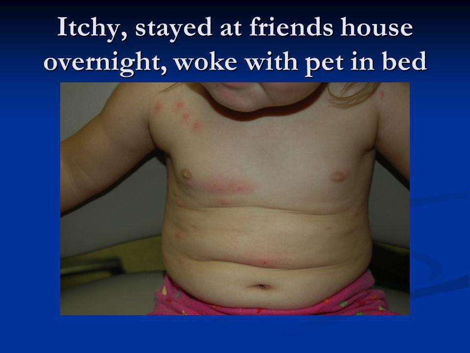 Itchy, stayed at friends house overnight, woke with pet in bed
