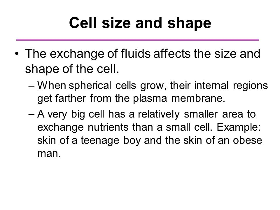 Cell size and shape The exchange of fluids affects the size and shape of the cell.