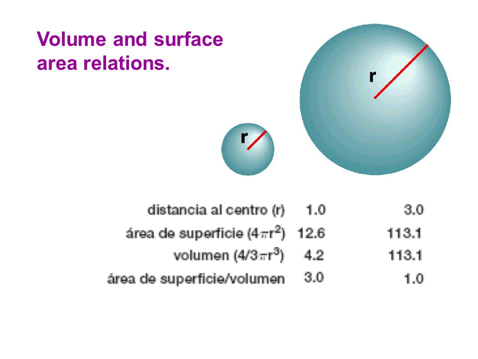 Volume and surface area relations.