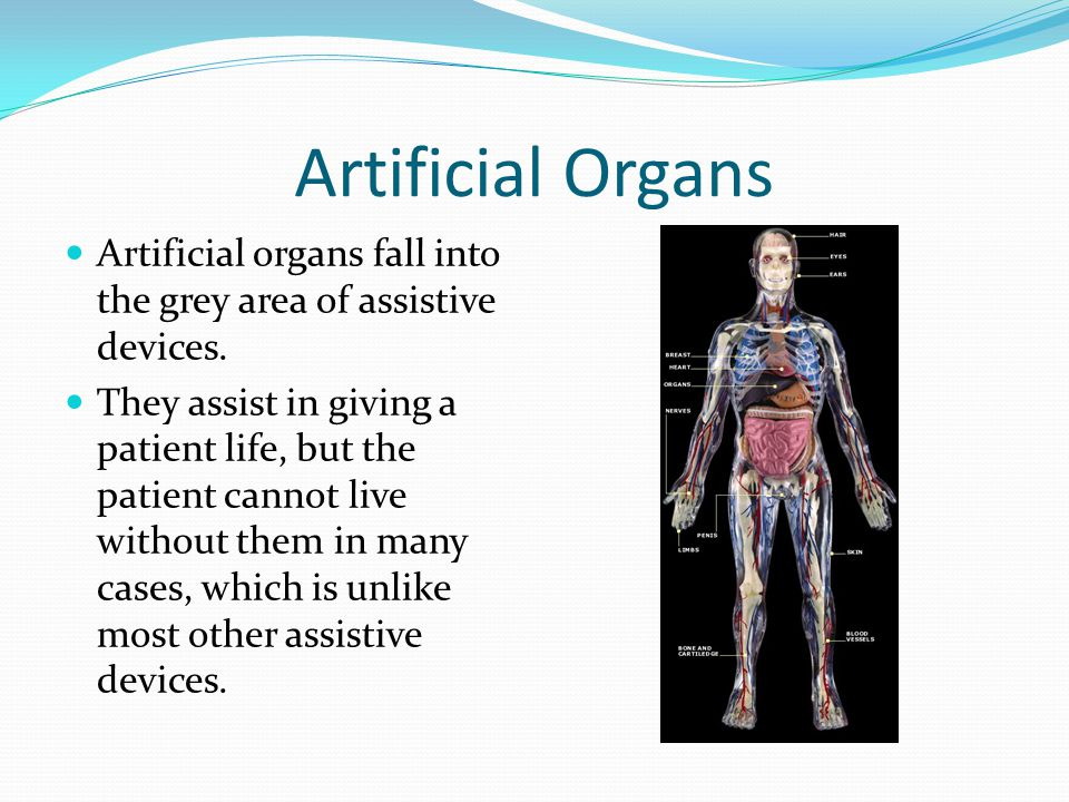 Artificial Organs Artificial organs fall into the grey area of assistive devices.