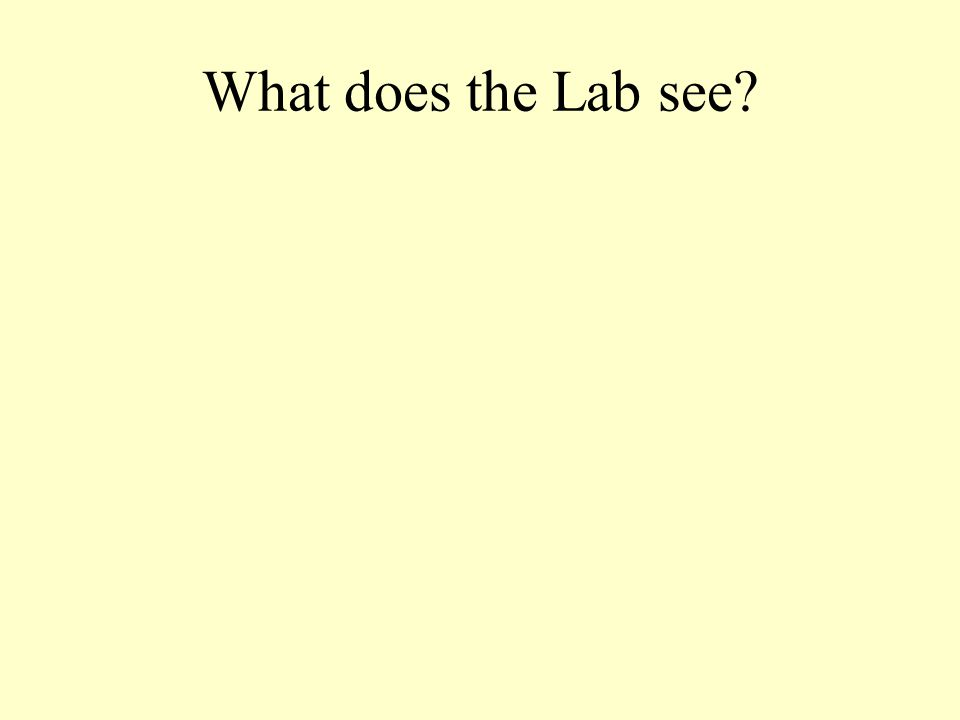 What does the Lab see