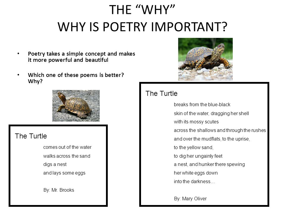 THE WHY WHY IS POETRY IMPORTANT