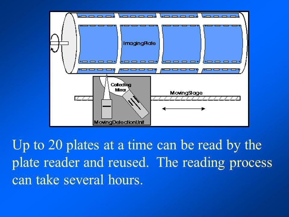 Up to 20 plates at a time can be read by the plate reader and reused