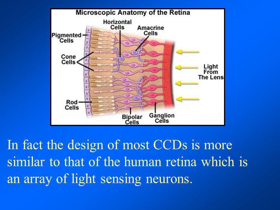 In fact the design of most CCDs is more similar to that of the human retina which is an array of light sensing neurons.