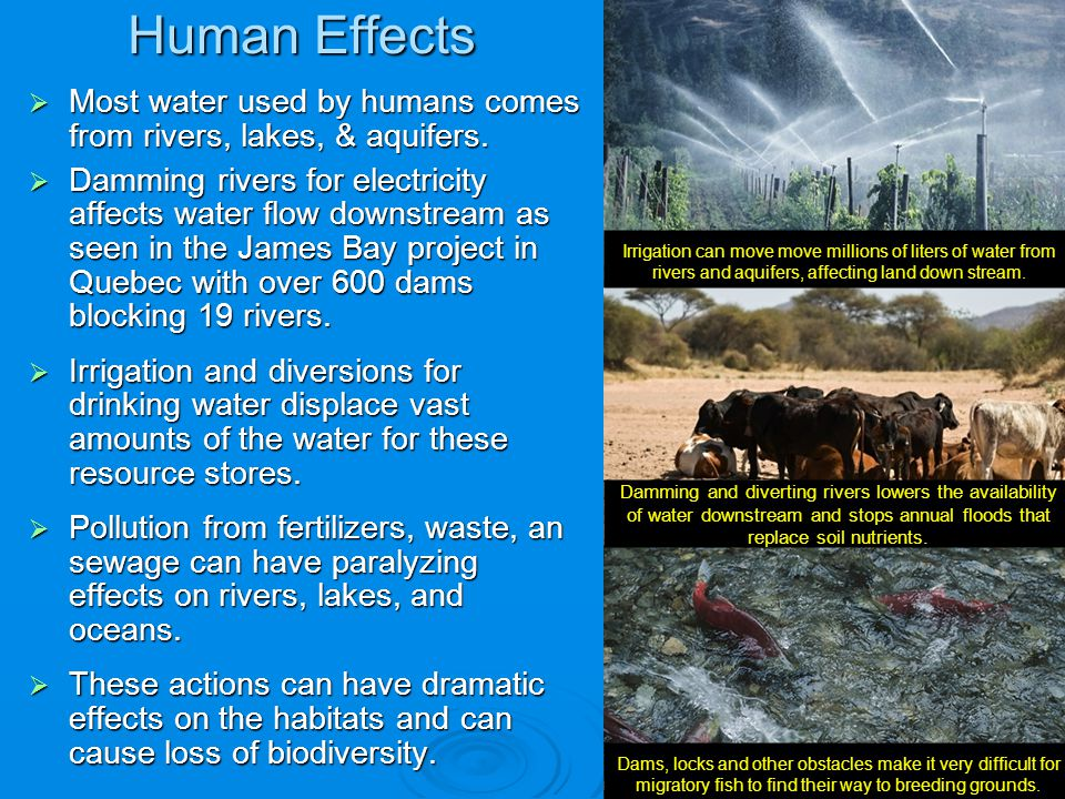 Human Effects Most water used by humans comes from rivers, lakes, & aquifers.