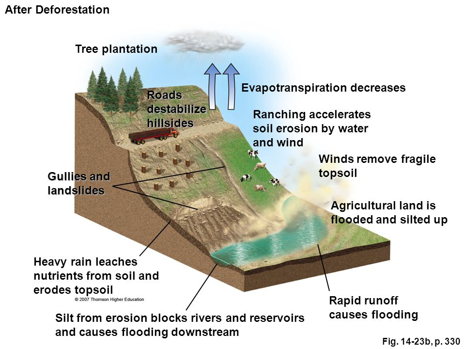 Evapotranspiration decreases Roads destabilize hillsides