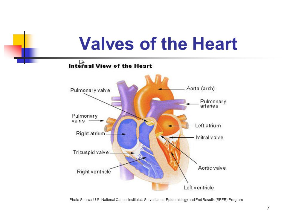 Valves of the Heart Photo Source: U.S.