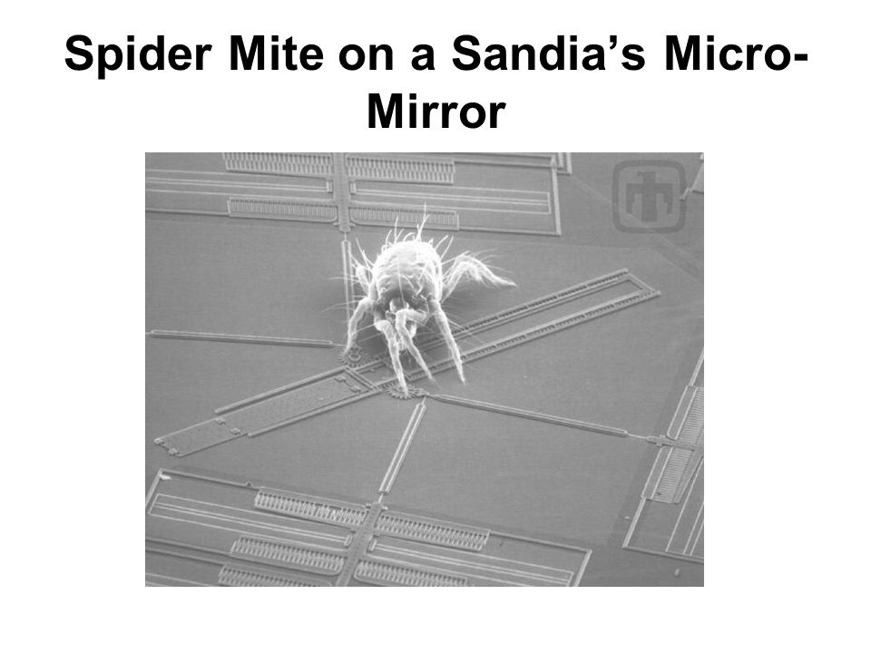 Spider Mite on a Sandia's Micro-Mirror