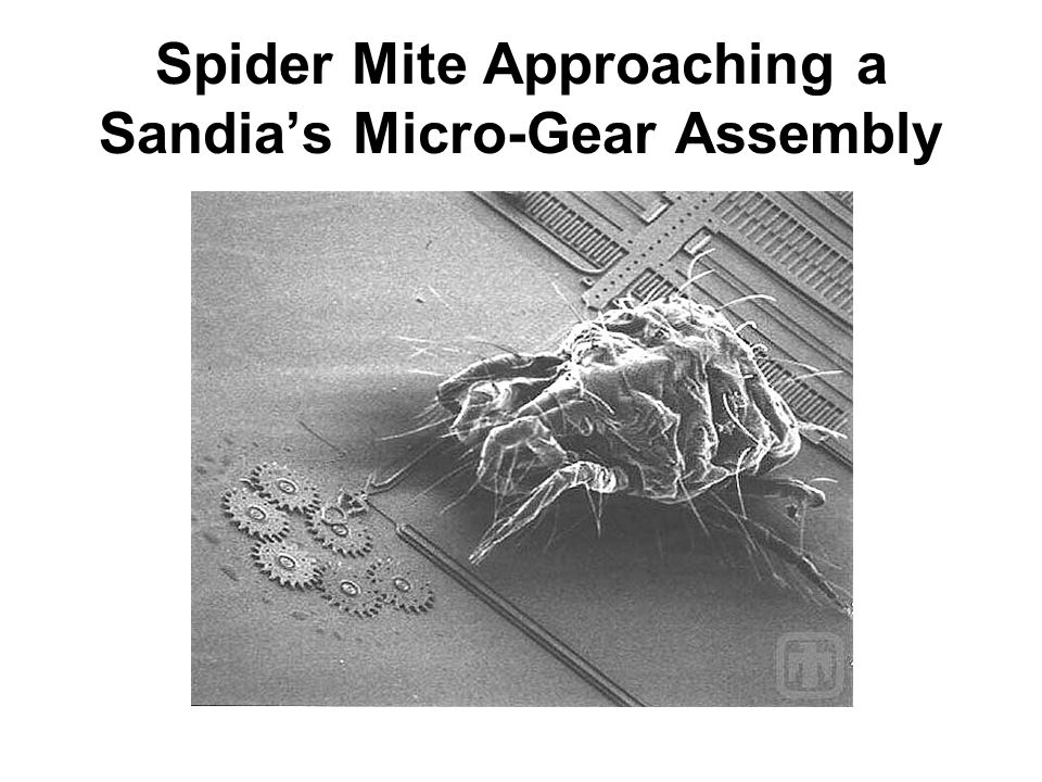 Spider Mite Approaching a Sandia's Micro-Gear Assembly