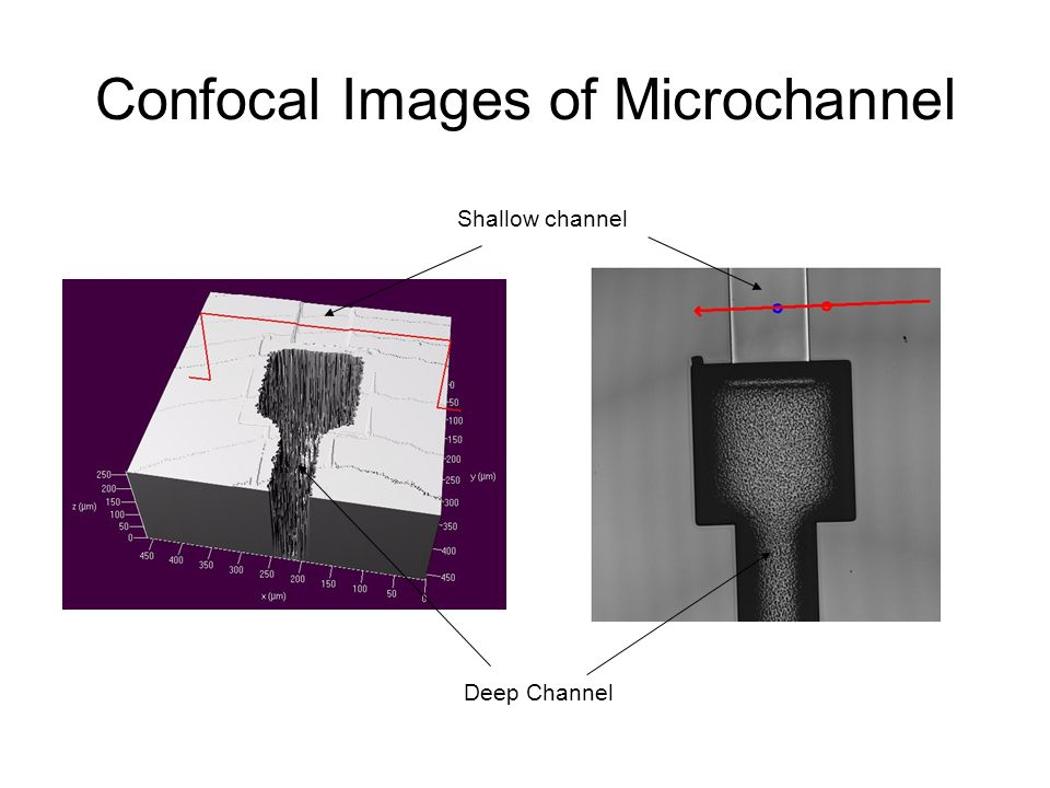 Confocal Images of Microchannel