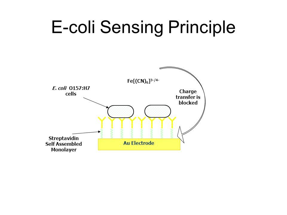 E-coli Sensing Principle