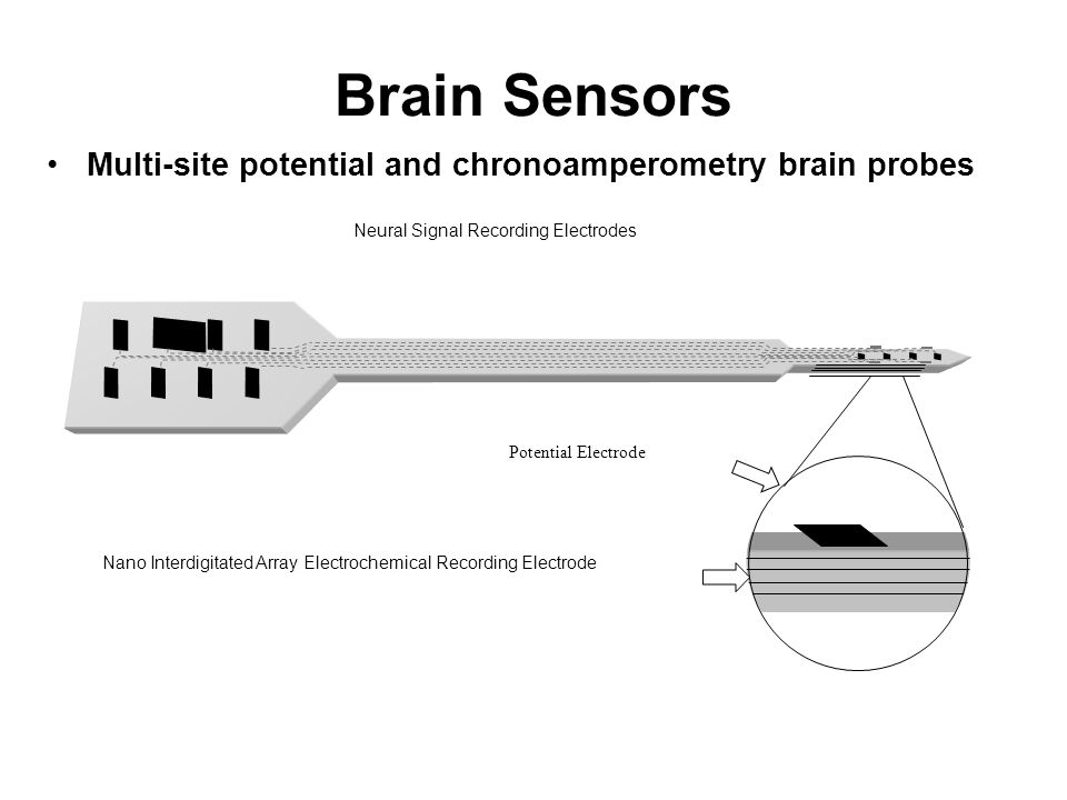 Brain Sensors Multi-site potential and chronoamperometry brain probes