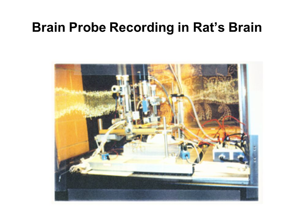 Brain Probe Recording in Rat's Brain