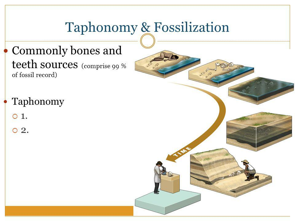 Taphonomy & Fossilization