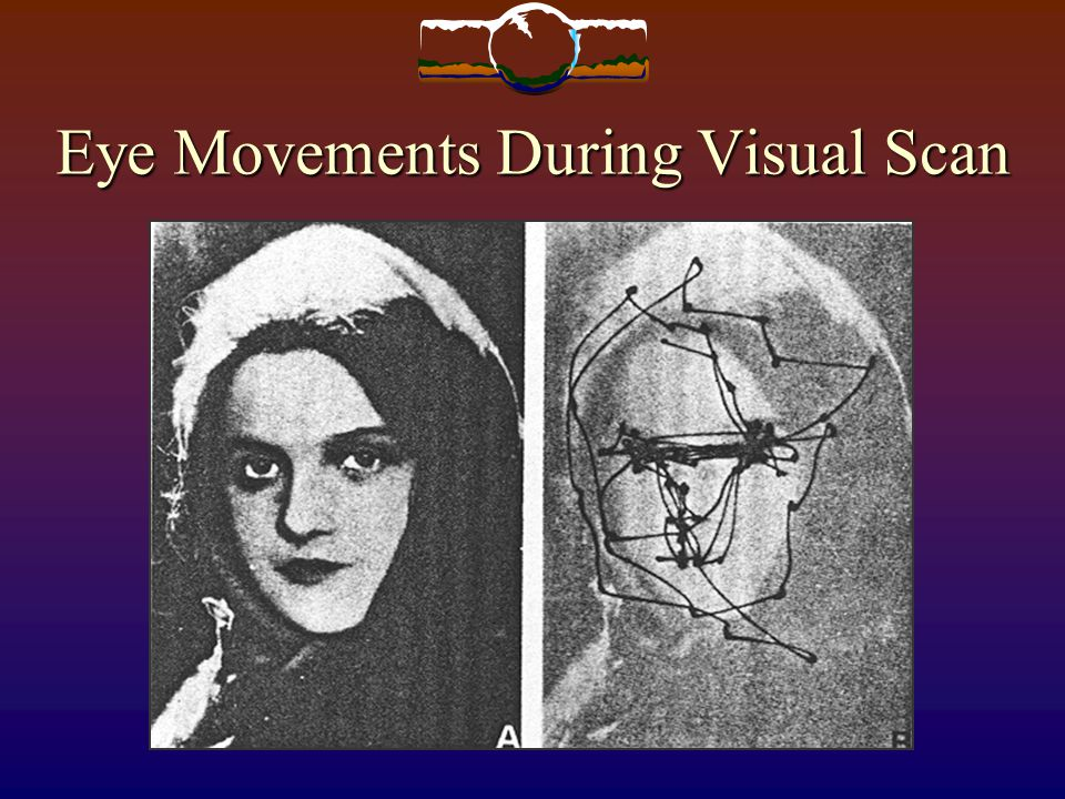 Eye Movements During Visual Scan