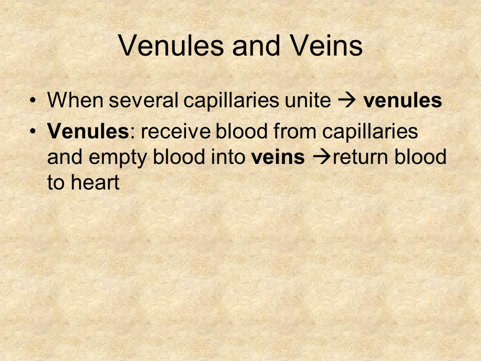 Venules and Veins When several capillaries unite  venules