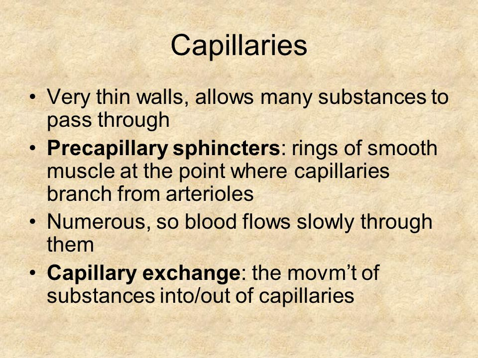 Capillaries Very thin walls, allows many substances to pass through