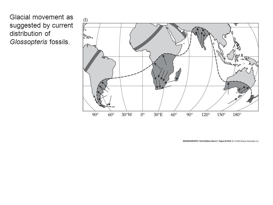 Glacial movement as suggested by current distribution of Glossopteris fossils.