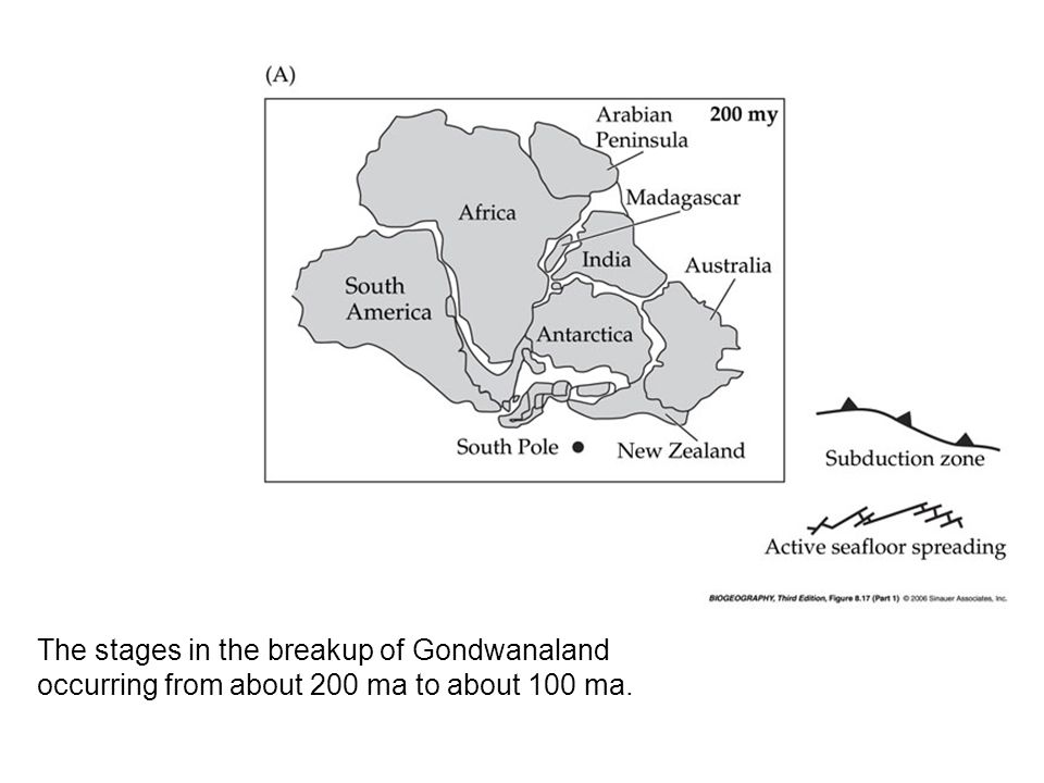 The stages in the breakup of Gondwanaland occurring from about 200 ma to about 100 ma.