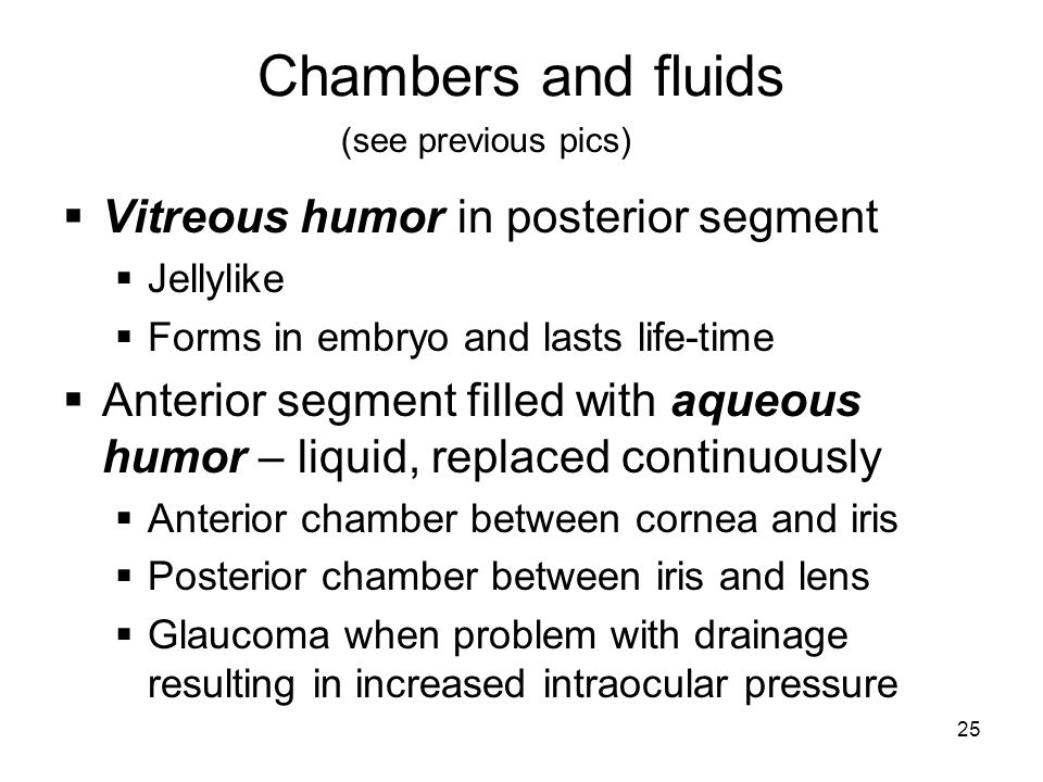 Chambers and fluids Vitreous humor in posterior segment