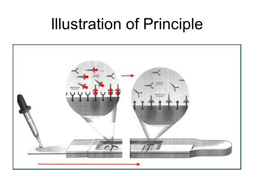 Illustration of Principle