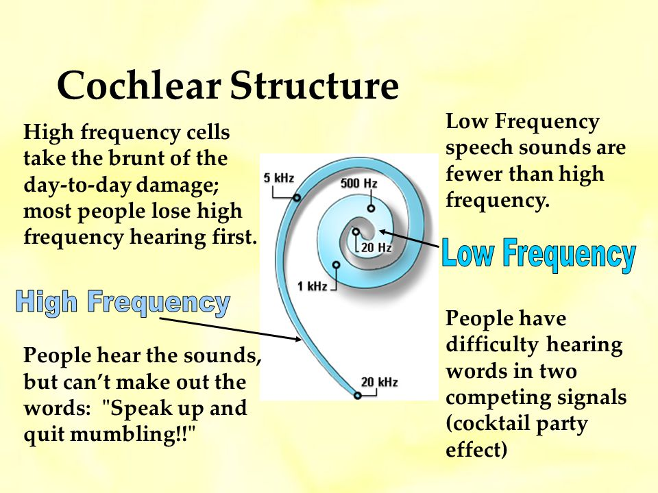 Cochlear Structure Low Frequency High Frequency