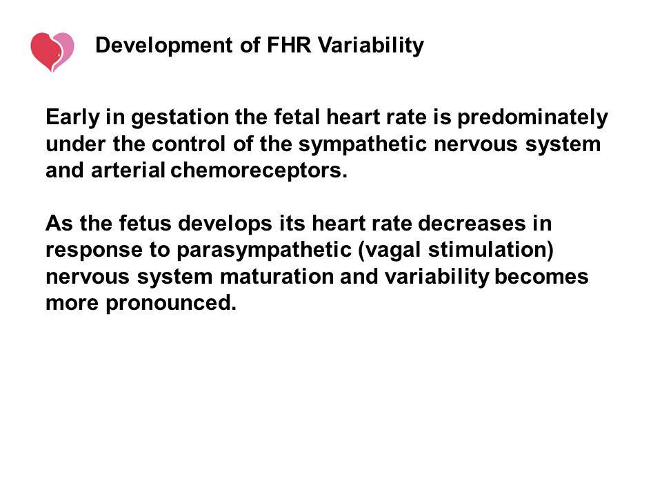 Development of FHR Variability