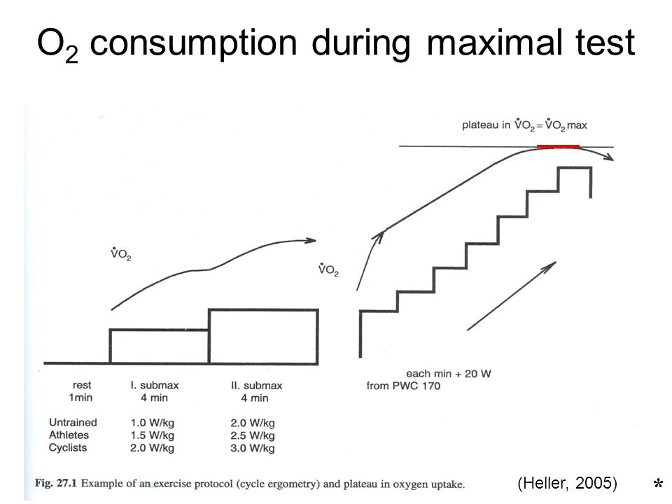O2 consumption during maximal test