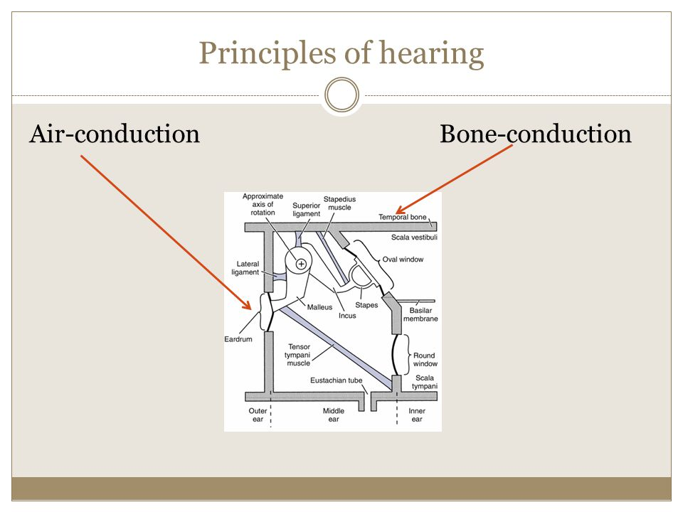 Principles of hearing Air-conduction Bone-conduction