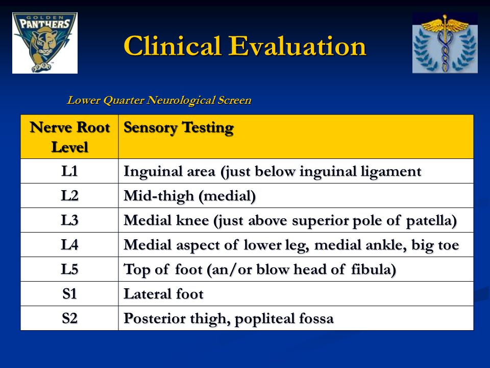 Clinical Evaluation Nerve Root Level Sensory Testing L1