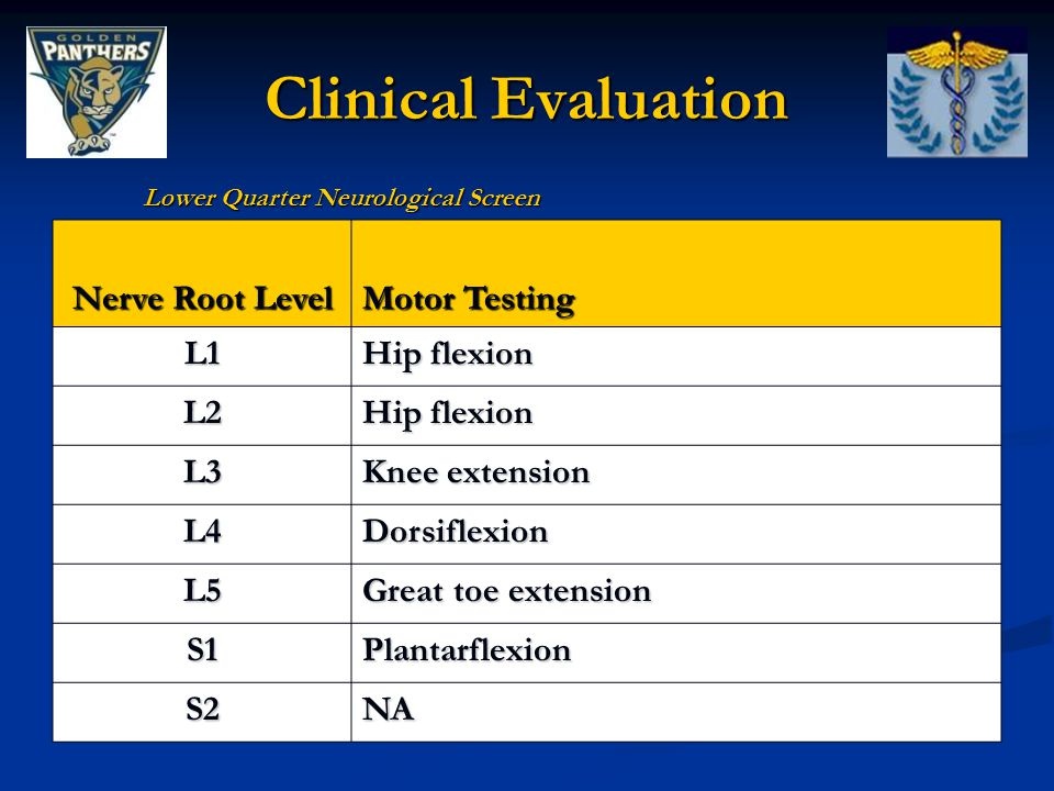 Clinical Evaluation Nerve Root Level Motor Testing L1 Hip flexion L2