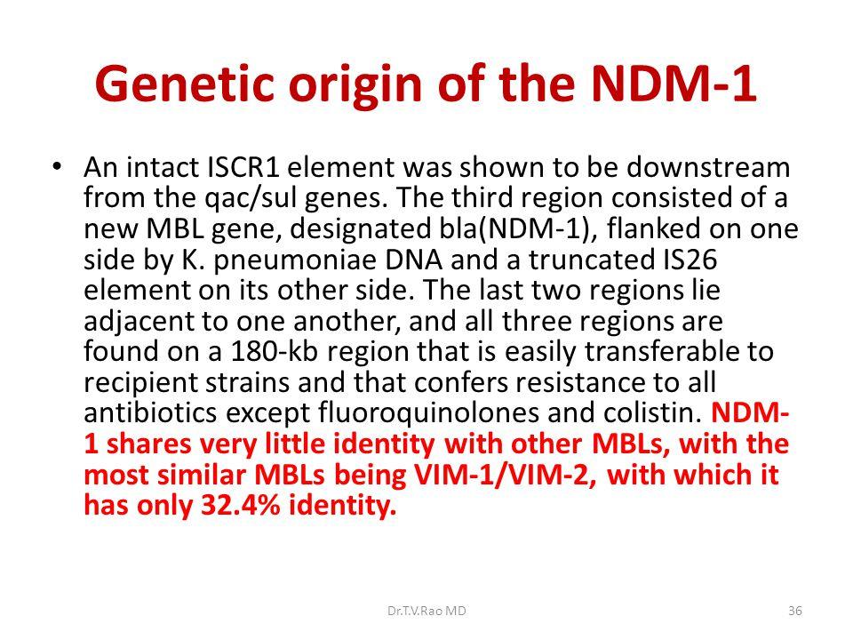 Genetic origin of the NDM-1