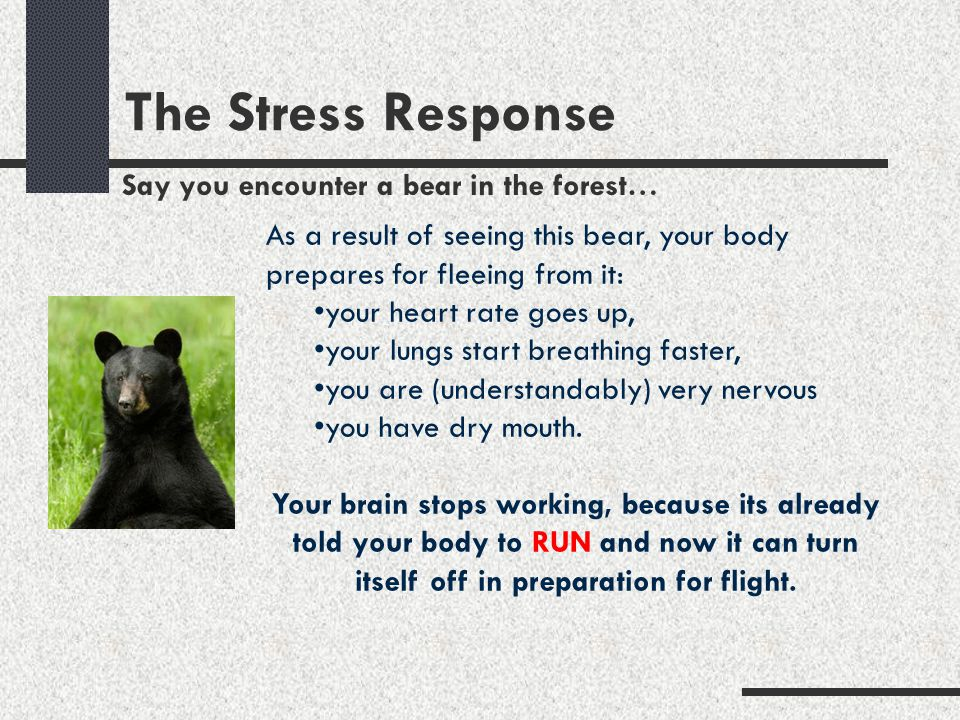 The Stress Response Say you encounter a bear in the forest…
