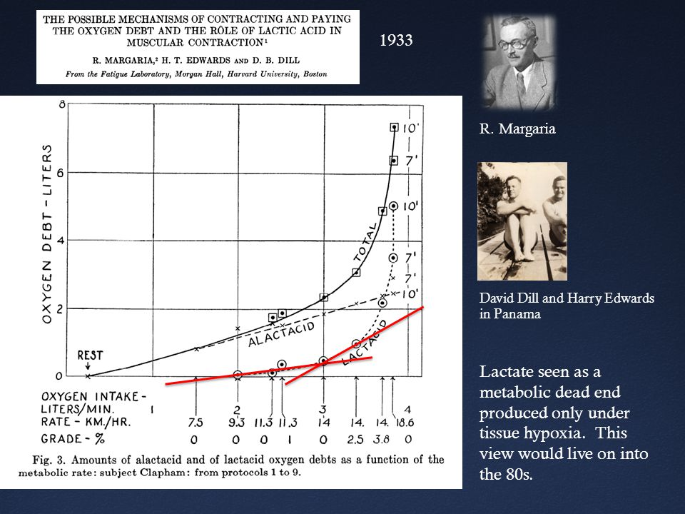 1933 Lactate seen as a metabolic dead end produced only under