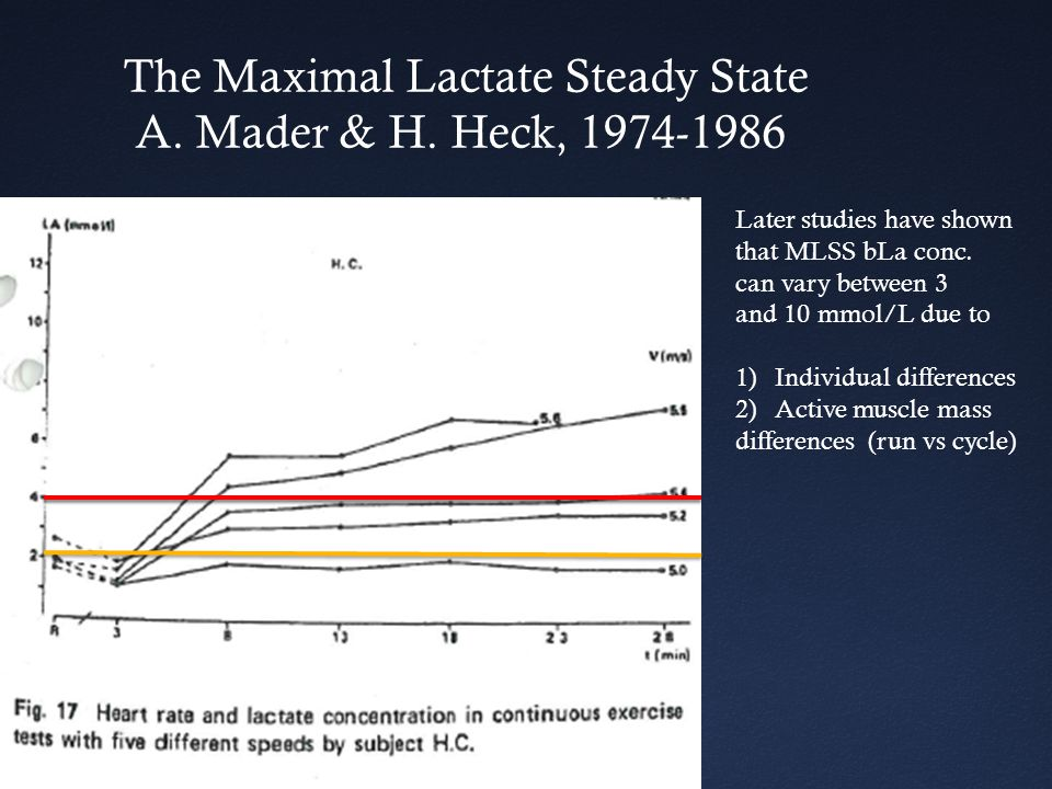 The Maximal Lactate Steady State A. Mader & H. Heck, 1974-1986