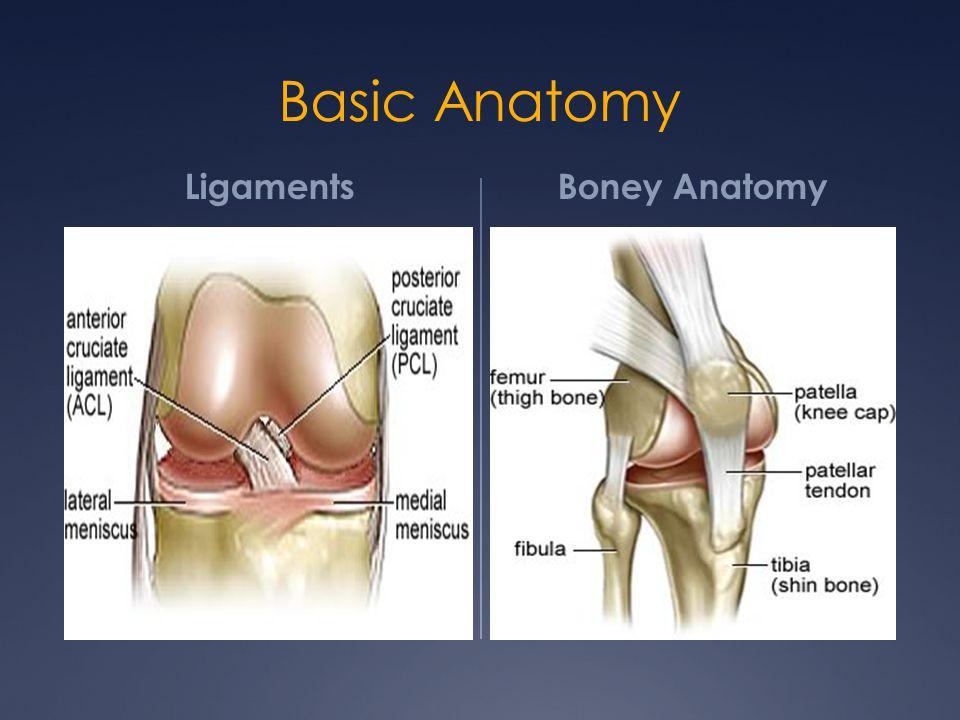 Basic Anatomy Ligaments Boney Anatomy