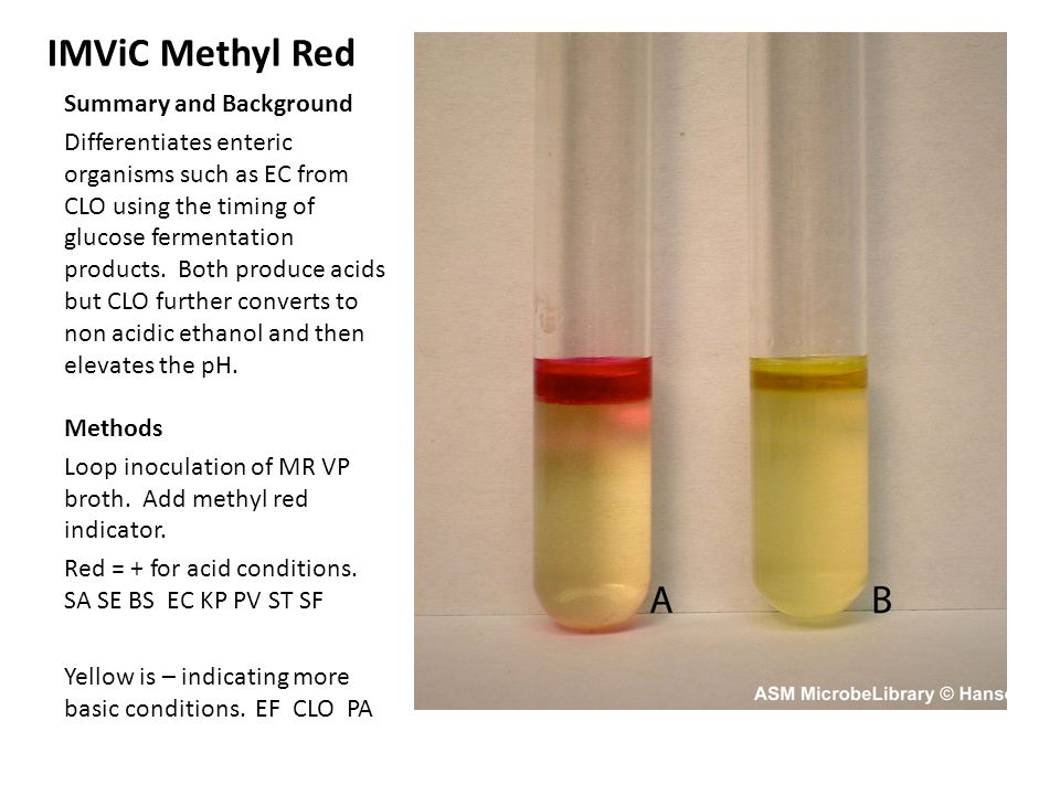 IMViC Methyl Red Summary and Background