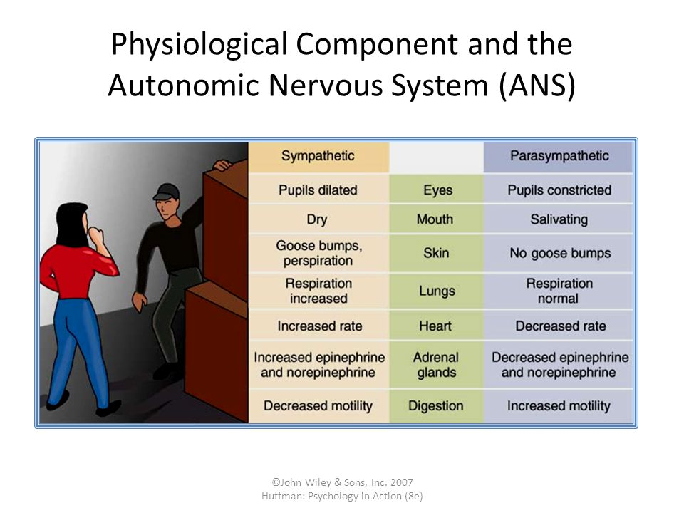Physiological Component and the Autonomic Nervous System (ANS)