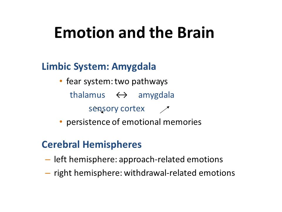 Emotion and the Brain Limbic System: Amygdala Cerebral Hemispheres