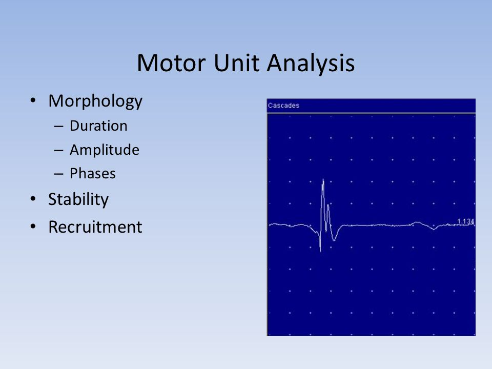 Motor Unit Analysis Morphology Stability Recruitment Duration