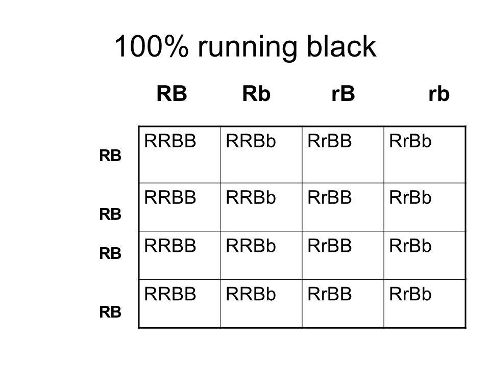 100% running black RB Rb rB rb RRBB RRBb RrBB RrBb RB RB