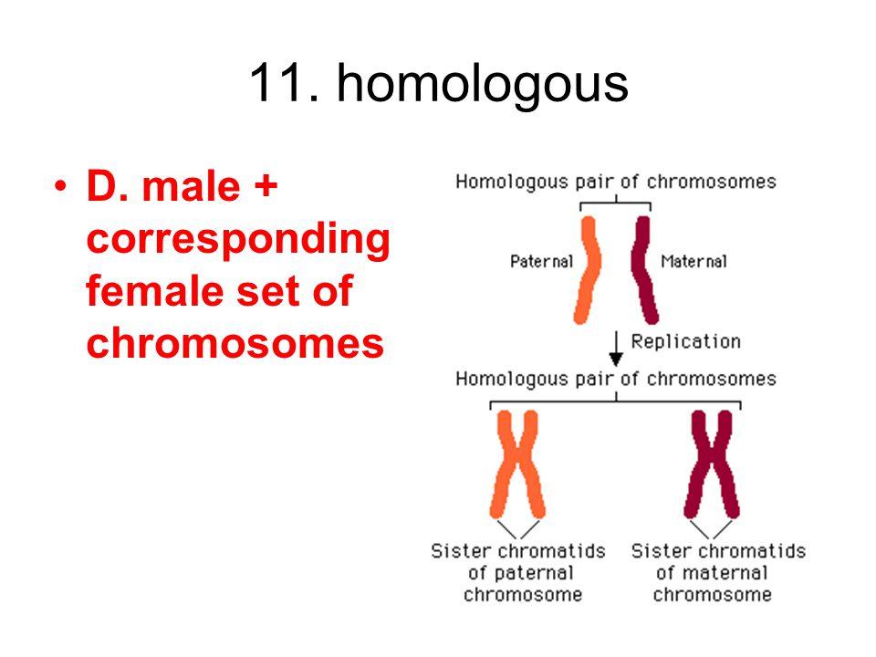 11. homologous D. male + corresponding female set of chromosomes