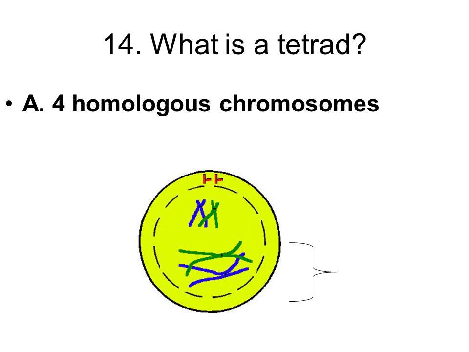14. What is a tetrad A. 4 homologous chromosomes
