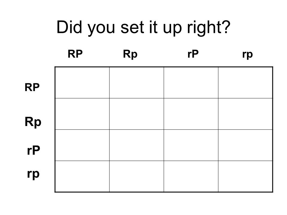 Did you set it up right RP Rp rP rp RP Rp rP rp