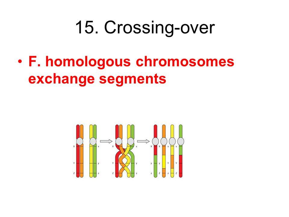 15. Crossing-over F. homologous chromosomes exchange segments